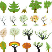 19 different kinds of tree include green trees cartoon tree One tree is presented in different seasons: winter spring summer autumn