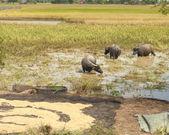 Rice Drying in Sun