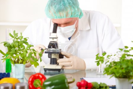 Photo for Researcher with microscope with a GMO vegetables. Genetically modified organism or GEO here transgenic plant is an plant whose genetic material has been altered using genetic engineering techniques known as recombinant DNA technology. - Royalty Free Image
