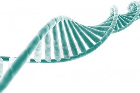 Photo for DNA strand isolated on white background - Royalty Free Image