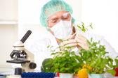 Chercheur brandissant un légume OGM en laboratoire