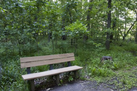 Wooden Park Bench in the Woods