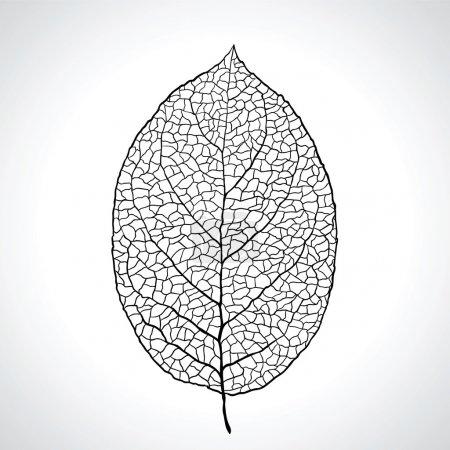 Illustration pour Macro feuille noire naturelle isolée. Illustration vectorielle . - image libre de droit