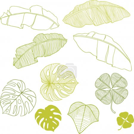 Illustration for Set of different leaves. A vector illustration. - Royalty Free Image