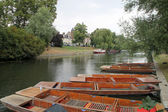 Punts in river Cam