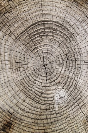 Photo pour Bouchent texture coupe en bois - image libre de droit