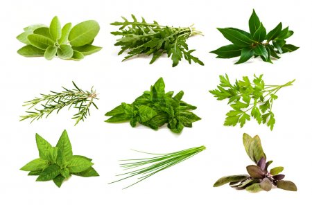 Photo for Mix aromatic herbs isolated on white - Royalty Free Image