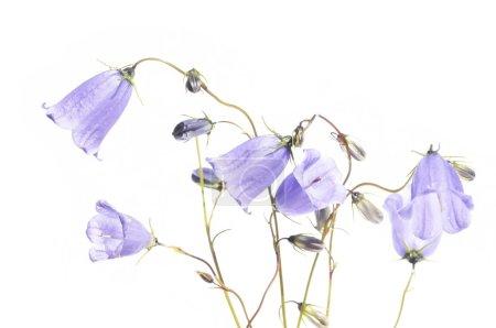 Lovely spring flora