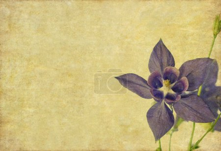 Earthy floral design element with copy space