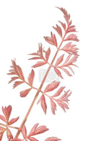 Pressed flora. lovely design elements.