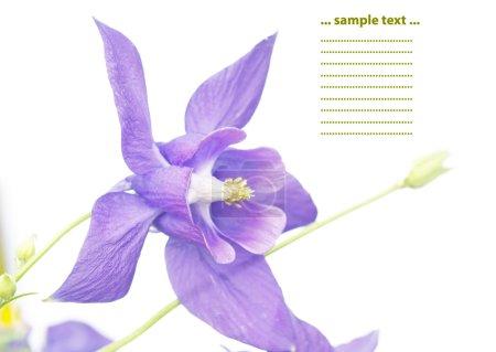 Floral design elements against white background
