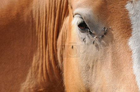 Abstract close-up of a brown horse