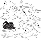 Set of Sea Swans
