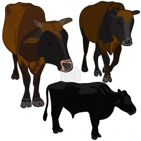 Bulls set