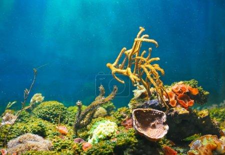 Colorful underwater world