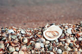 Two wedding rings in shell