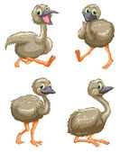 Emu ostrich series