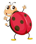 Illustration of a comical ladybird