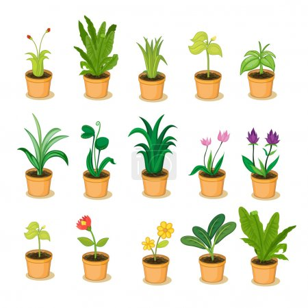 Illustration for Series of isolated plant in pot illustrations - Royalty Free Image