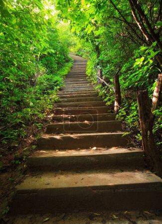 Photo pour Escaliers vers la forêt - image libre de droit