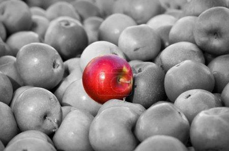 Photo pour Se démarquer de la foule Pomme Rouge au milieu du Black and White Average Group - image libre de droit