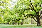 """Постер, картина, фотообои """"дерево, парк"""""""