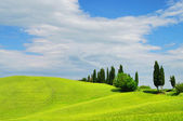 Cypress avenue, Tuscany