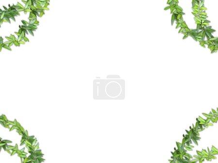 Frame of vegetation