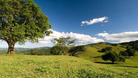Rolling Hills of the Dominican