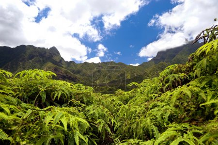 Iao Valley - Maui