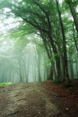 Road through a green forest with fog