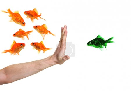 Photo for Hand discriminating green goldfish isolated on white - Royalty Free Image