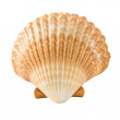 Beauty seashell isolated on white...