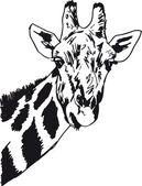 Sketch of giraffe head Vector illustration