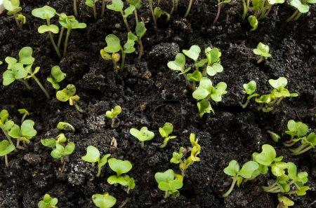 Seedlings on soil