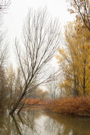Autumn Trees on Pond