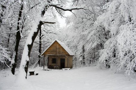 Abandoned house in the snowy woods