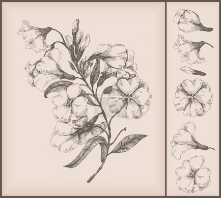 Illustration for Vintage flower drawing - Royalty Free Image