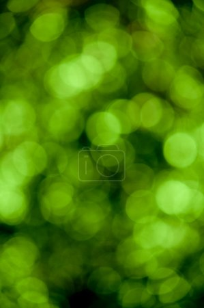 Green bokeh texture background