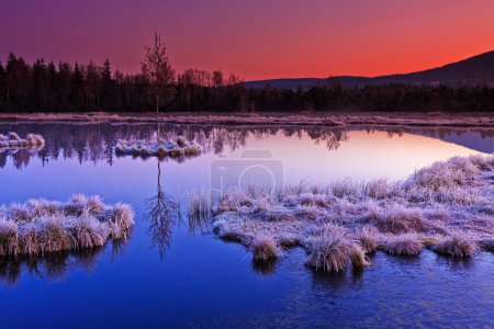 Frozen moor dawn