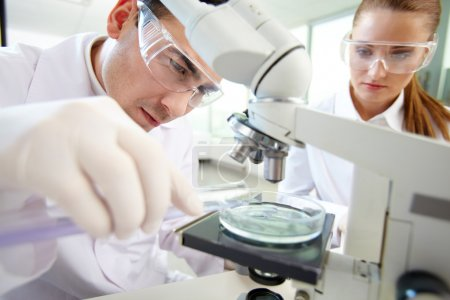 Photo for Serious clinician studying chemical element in laboratory with his assistant near by - Royalty Free Image